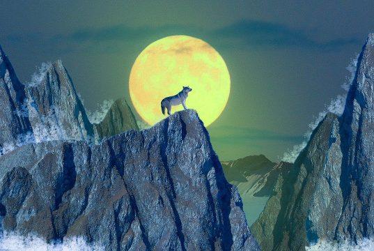 wilkołak