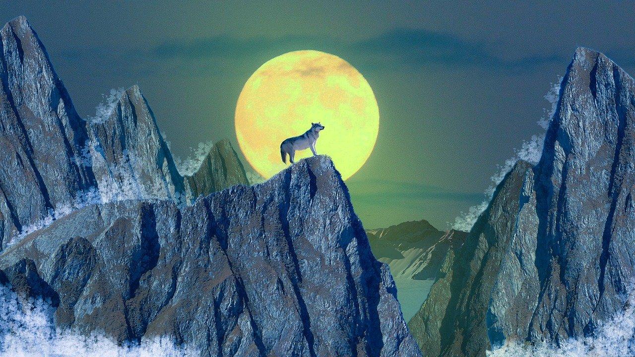 Wilkołak – legendarne połączenie człowieka i wilka